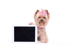 Dog with paw holding a digital tablet computer